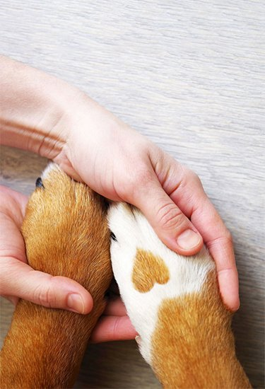 pet owner holding pets paws