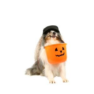 Stop by BAEH for pet safe trick-or-treating